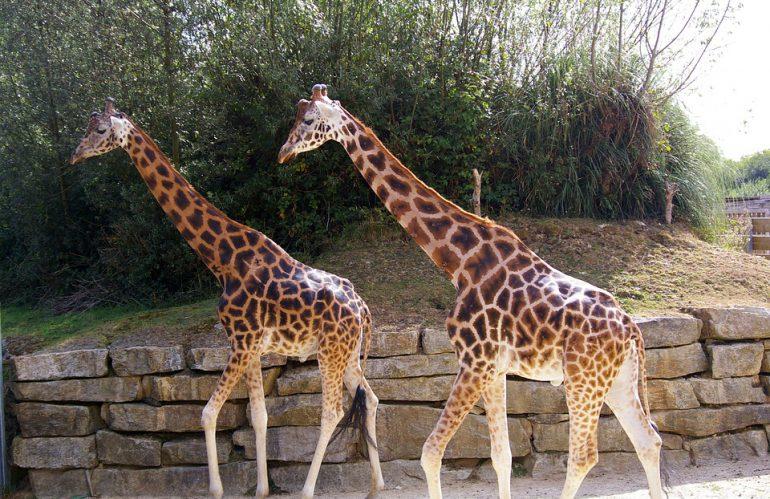 Profiteren van Wildlands Zoo korting