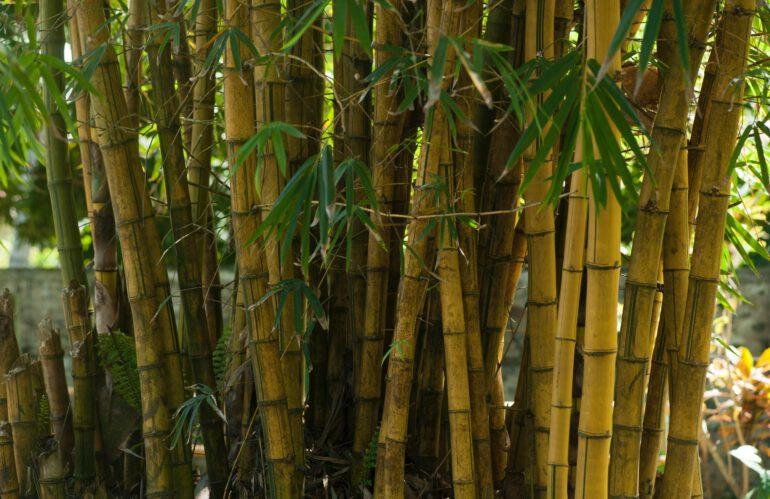 De voordelen van bamboe stoffen op een rij