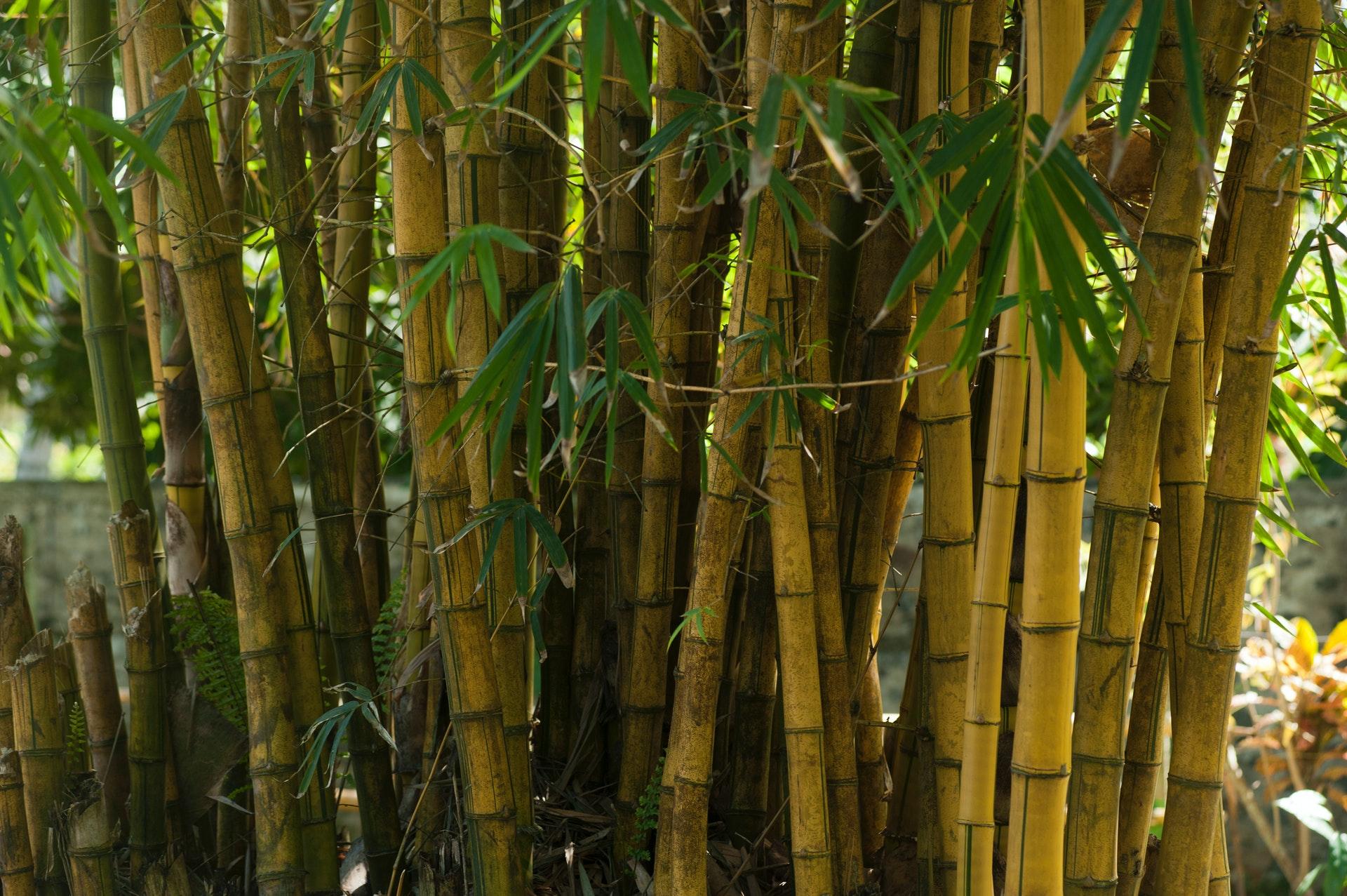 voordelen bamboe stoffen