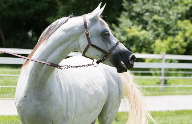 Vliegendeken voor gevoelige paarden